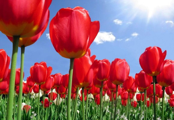 Cvijeće u proljeće - GuGu mama&co.GuGu mama&co.