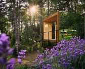 U šumi slovenske Toskane – virtuelni izlet