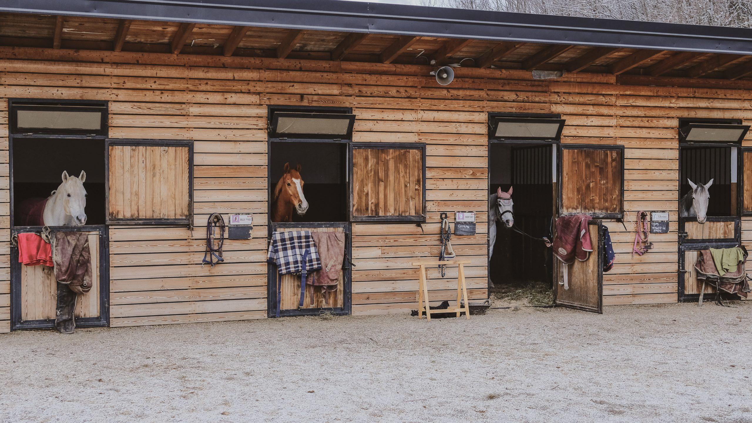 Lazy Horse 1-4