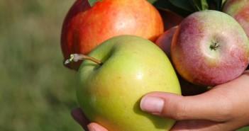 apple butter bars apples in hands